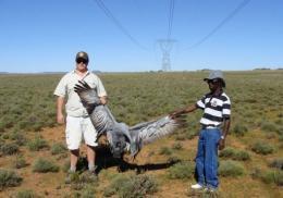 Men hold an electrocuted blue crane