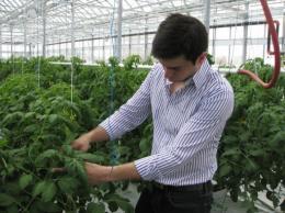 Mohamed Hage checks plants