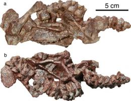 New captorhinid reptile found in China