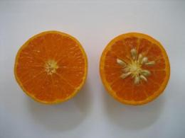 New citrus variety released by UC Riverside is very sweet, juicy and low-seeded