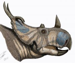 New horned dinosaur announced nearly 100 years after discovery