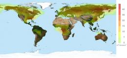 New satellite observations reveal link between forests and acid rain