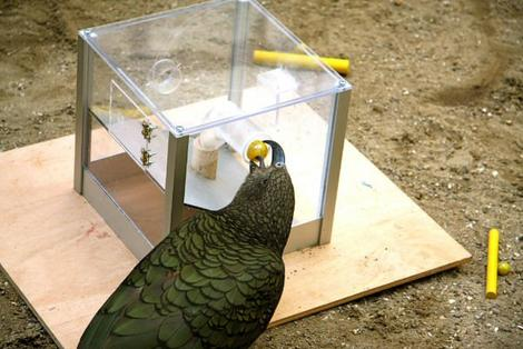 New study of crows and parrots highlights different types of intelligence