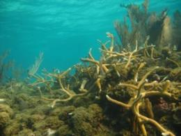 New study of Glover's Reef challenges whether corals will benefit from Marine Reserves' protection