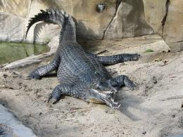New Texas native: 96-million-year-old croc