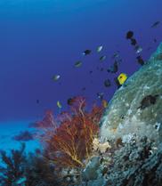 No plain sailing for marine life as climate warms