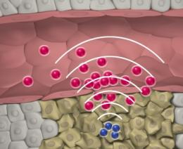 Novel nanoparticles communicate to target tumors more efficiently