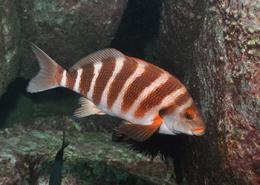 Ocean warming detrimental to inshore fish species
