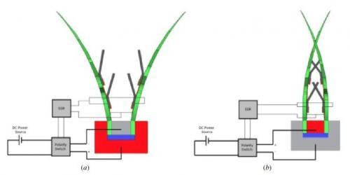 Mechanical engineer creates robot Venus Flytrap