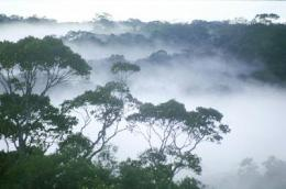 Old-growth rainforests vital for tropical biodiversity: study