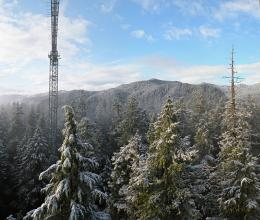Pacific Northwest trees struggle for water while standing in it
