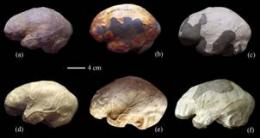 Peking man differing from modern humans in brain asymmetry
