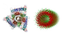 Penn researchers help nanoscale engineers choose self-assembling proteins