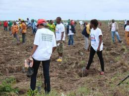 People take part in a tree planting project in Yie