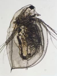 Possible biological control discovered for pathogen devastating amphibians