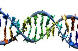 Regulation blocking genetically engineered food animal development, report finds