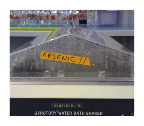 Replication of arsenic life experiment not successful so far