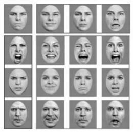 Research shows that some features of human face perception are not uniquely human