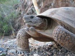 Rockin' tortoises: A 150-year-old new species