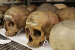 Samuel Morton collection of skulls at center of controversy