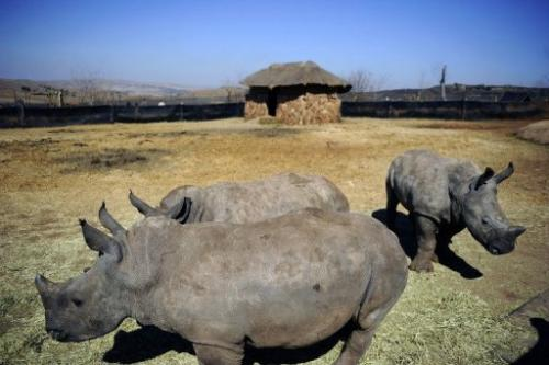 South Africa has responded to the surge by dispatching army troops to fight poachers and stepping up arrests