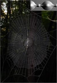 Spider silk glue inspires next-generation technology
