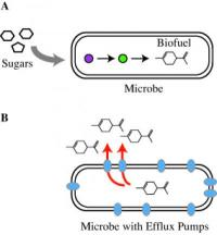 Striking the right balance: JBEI researchers counteract biofuel toxicity in microbes