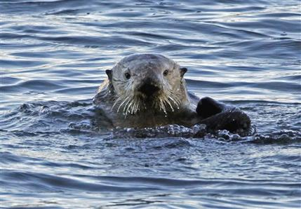 Study shows best places to protect marine mammals (AP)