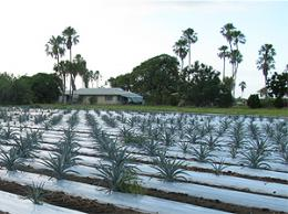 Tequila plant could fuel vehicles and help reduce emissions