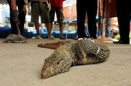 Thai customs officials have put the estimated street value of the reptiles at $60,000