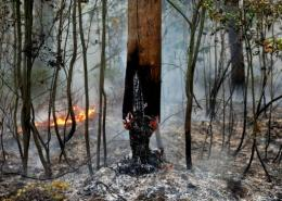 The burnt-out trunk of a tree is seen in a forest in Russia during the 2010 heatwave