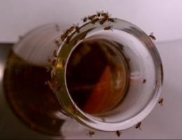 The buzz around beer
