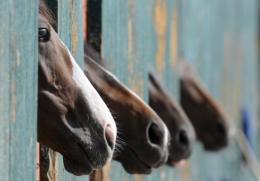The Hendra virus, which has killed 7 horses in Australia, is  believed to be carried by fruit bats