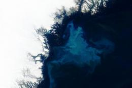 This NASA Aqua satellite image released in 2003 shows clouds of phytoplankton