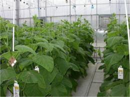 Twin-head cucumber system reduces start-up costs
