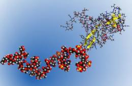 Uncharted territory: Scientists sequence the first carbohydrate biopolymer
