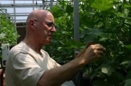 Unique lab seeks drought-tolerant traits in cotton, other plants