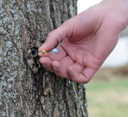 Using trees to detect contaminants and health threats