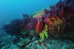 Warming of the Mediterranean Sea hampers the resistance of corals and mollusks to ocean acidification