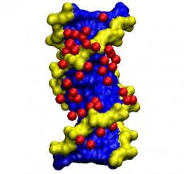 Water molecules characterize the structure of DNA genetic material