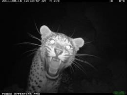 WCS confirms the return of the Persian leopard In Afghanistan's central highlands