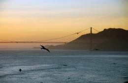 Why are California birds getting bigger?