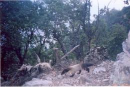 Wildlife surviving conflict in Afghanistan