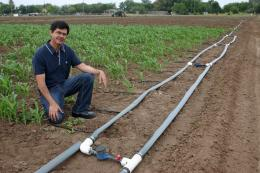 Scientist: when it comes to energy crops, do the math