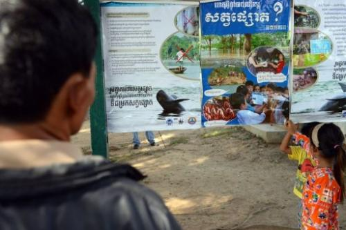 A Cambodian man looks at dolphin conservation posters at a tourist site along the Mekong river on December 6, 2012