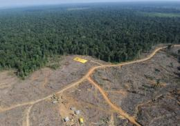 A coalition of green groups in Indonesia has criticised a moratorium on deforestation as