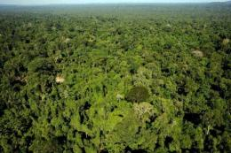 Aerial view of the Amazonic forest reserve in northern Brazil