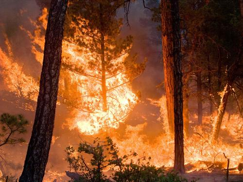 Climate models project increase in US wildfire risk