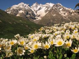 Genetic diversity : The hidden face of biodiversity
