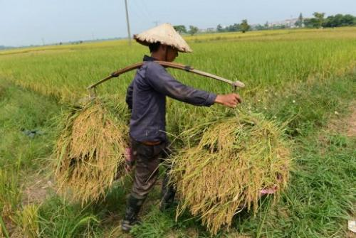 Global food prices rose by 1.4% last month
